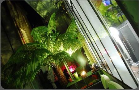 Terrasse avec palmier éclairé du loft Actlieu à Nantes