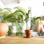 Des plantes vertes dans un loft à Paris